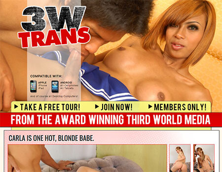 3wtrans review